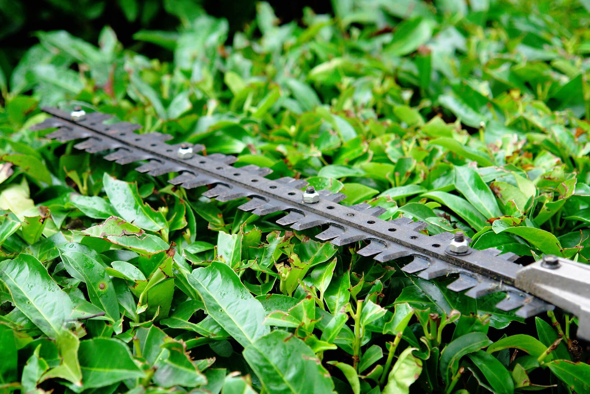 hedge trimmer
